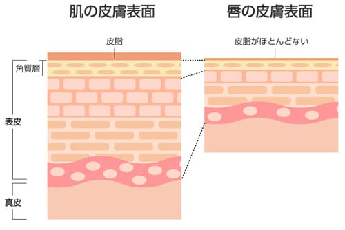 唇の皮膚の表面